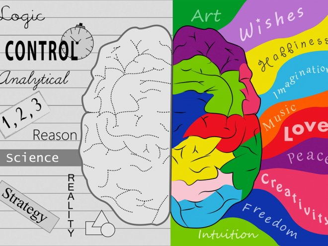 understanding the science behind the left brained right brained debate the structurefunction and dev